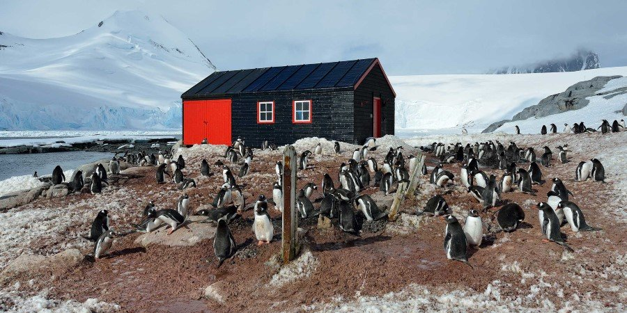 Port-Lockroy-Landscape-and-penguins---Marsel-van-Oosten.jpg